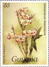 [Orchids, Typ AIV]