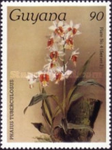 [Orchids, Typ AJO]