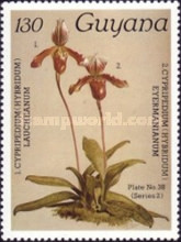 [Orchids, Typ AJP]