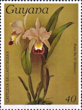 [Orchids, Typ AJR]