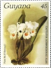 [Orchids, Typ AKF]