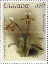 [Orchids, Typ AKN]