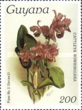 [Orchids, Typ AKW]