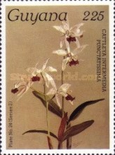 [Orchids, Typ AKX]