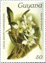 [Orchids, Typ ALC]