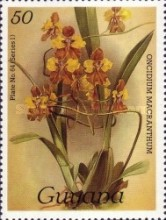 [Orchids, Typ ALI]
