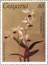 [Orchids, Typ ALJ]