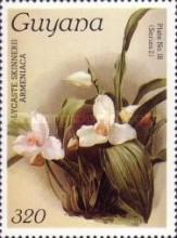 [Orchids, Typ ALW]