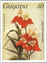 [Orchids, Typ AMD]