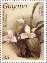 [Orchids, Typ AMM]