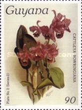 [Orchids, Typ AMN]