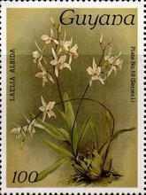 [Orchids, Typ ANA]