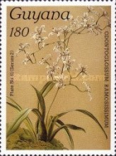 [Orchids, Typ ANE]