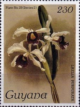 [Orchids, Typ ANF]