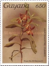 [Orchids, Typ ANH]