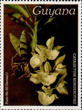 [Orchids Issues Surcharged, Typ ANJ1]
