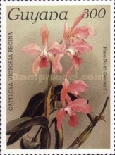 [Orchids, Typ ANK]