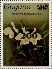 [Orchids - Overprinted, Typ ANP5]