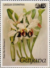 [Orchids - Surcharged & Overprinted, Typ ANR1]