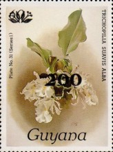 [Orchids - Surcharged & Overprinted, Typ ANR8]