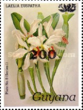 [Orchids - Surcharged, Typ ANV]