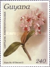[Orchids, Typ AOQ]