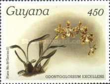 [Orchids, Typ AOU]