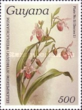 [Orchids, Typ AOW]
