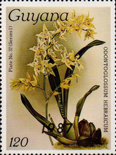 [Orchids - Overprinted, Typ AUM]