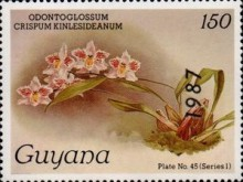 [Orchids - Overprinted, Typ AUV]