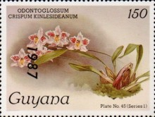 [Orchids - Overprinted, Typ AUY]