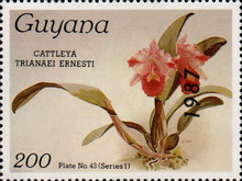 [Orchids - Overprinted, Typ AVC]