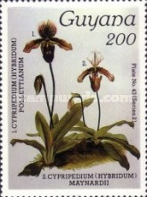 [Orchids, Typ AWQ]
