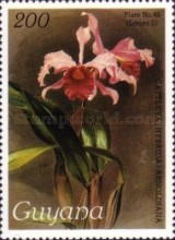 [Orchids, Typ AWR]
