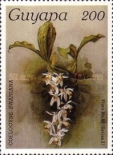 [Orchids, Typ AWS]