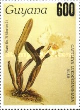 [Orchids, Typ AWU]