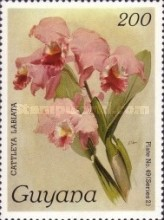 [Orchids, Typ BMS]