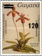 [Orchids, Typ BPJ]