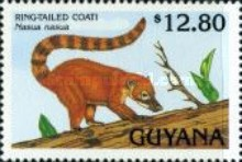 [Animals of Guyana, Typ DBI]