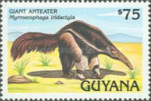 [Animals of Guyana, Typ DBM]