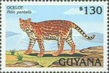 [Animals of Guyana, Typ DBO]