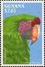 [South American Parrots, Typ DHZ]