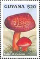 [Fungi of the World, Typ FZY]