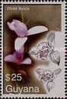 [Orchids, Typ IXW]