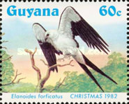 [Christmas - Swallow-tailed Kites, Typ XS]