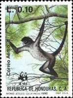 [Airmail - The Black-handed Spider Monkey, type QS]