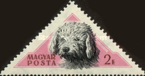 [Hungarian Dogs, Typ AXO]