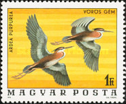 [Birds from the National Park Hortobagy, Typ DLE]