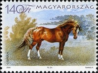 [Horse Breeds, Typ GHC]