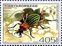 [Fauna of Hungary - Insects, type HGF]
